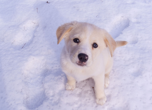 ella the snow puppy