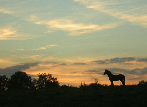 Horse on the skyline