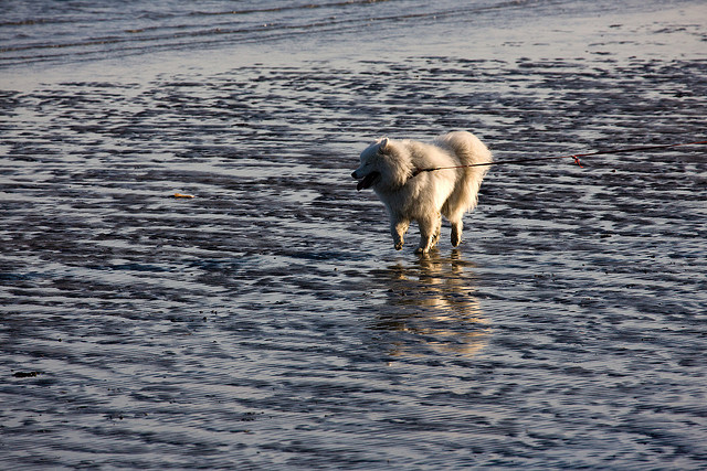 Sandymount - Dublin (Nice Dog) - Photo by infomatique