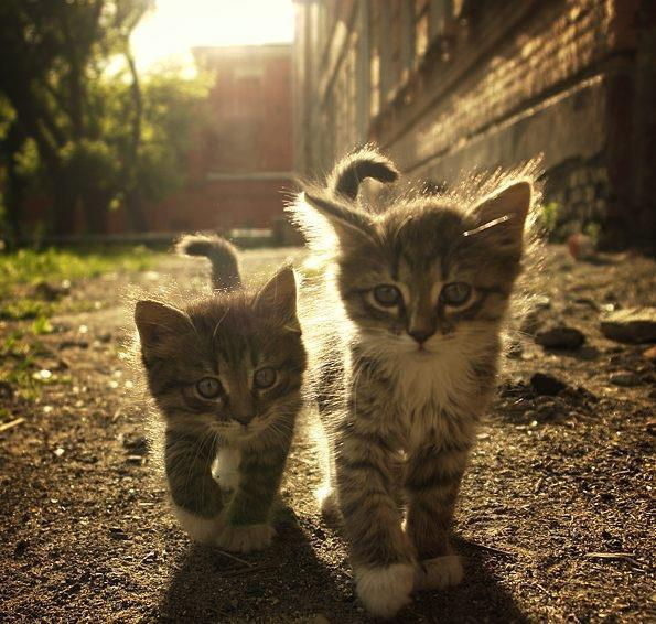 Super-cute kittens - Photo by Redditor_of_Catan - Reddit/Imgur