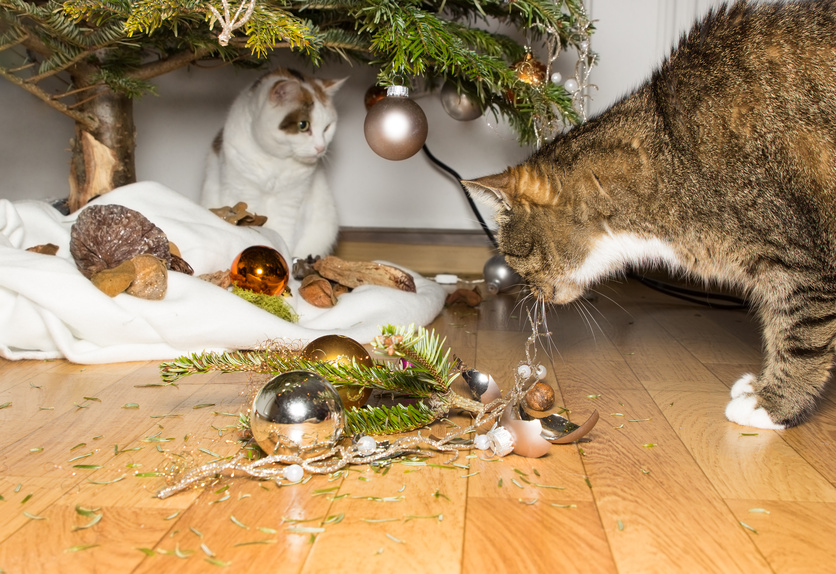 10 Tips On How To Keep Pets Safe At Christmas