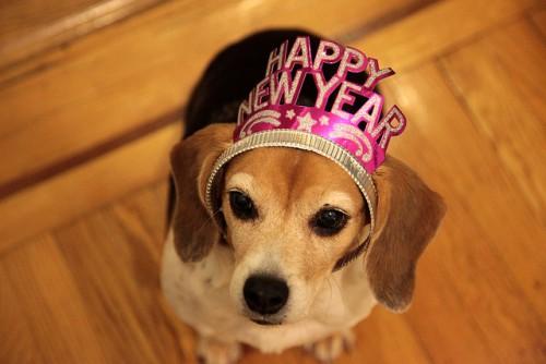 Happy New Year Dog - By Cutiepie Company