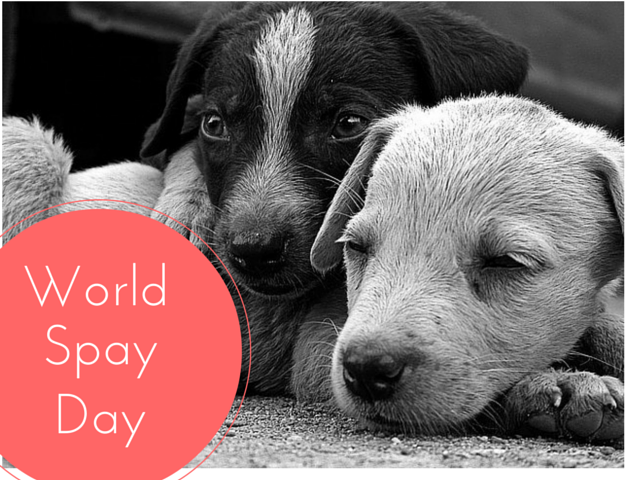 Two Stray Puppies - World Spay Day