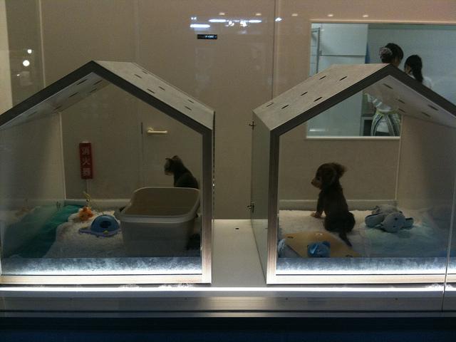 A dog hotel in Tokyo