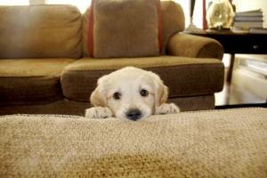 Peek-a-boo! - Photo by Splah - Reddit/Imgur