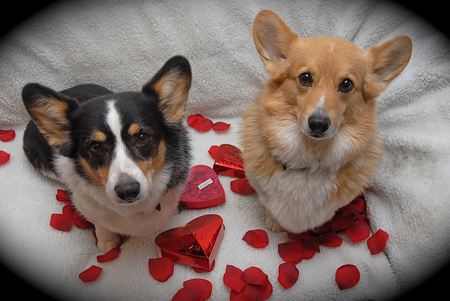 Two Corgis Valentines