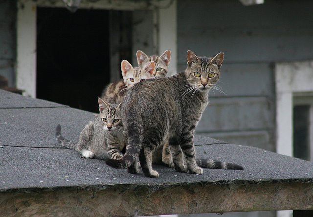 Feral Cat and Her Kittens - World Spay Day