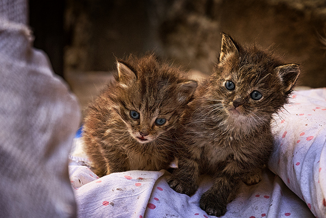 Two Stray Kittens - World Spay Day